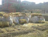زراعة القليوبية تستعد لتجميع قش الأرز ومنع حرقه بالتنسيق مع البيئة