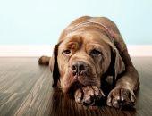 لو اتعضيت من كلب.. كيف تصاب بالسعار وماذا يحدث لك حال عدم علاجك؟