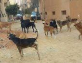 حى الخليفة يستجيب لشكاوى المواطنين ويتخلص من 30 كلبا بمحيط منطقة القلعة