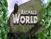 """تعرف على طائر """"دجاج وادى غرب إفريقيا"""" فى حلقة جديدة على فارولاند"""