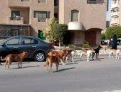 بالصور.. مواطنون يشكون من انتشار الكلاب الضالة بشوارع التجمع الأول
