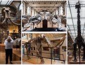 لأعلى سعر.. هيكل عظمى لديناصور من العصر الحجرى فى مزاد بفرنسا
