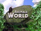 """ما هو طائر أبو قرن الهندى؟ حلقة جديدة من برنامج """"Animals World"""" على فارولاند"""