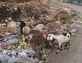 شكوى من تراكم القمامة بمدخل عزبة عبد العظيم التابعة لمركز سنورس بالفيوم