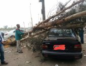 أعمال ترميم بمصر الجديدة تتسبب فى سقوط شجرة على إحدى السيارات