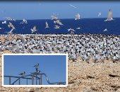 تعاون بين وزارتى البيئة والسياحة لتحقيق تنمية سياحية مستدامة