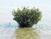 س و ج كل ماتريد معرفته عن مشروع زراعة نبات السليكورنيا بالبحر الأحمر