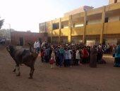 التعليم تحقق فى مشاركة جاموسة بطابور الصباح بإحدى المدارس استجابة لليوم السابع