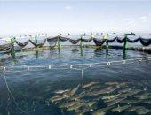 أهالى سهل الطينة ببورسعيد يطالبون بمهلة قبل إزالة المزارع السمكية بالمنطقة
