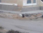 انتشار الكلاب الضالة فى شارع نجيب محفوظ بالمعادى والأهالى يطالبون بنقلها