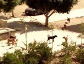 انتشار ظاهرة الكلاب الضالة بشارع الشيخ منصور فى عزبة النخل