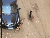 شكوى من انتشار الكلاب الضالة فى شارع بولاق الجديد