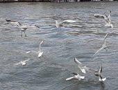 """مصر تحتفل باليوم العالمى للطيور المهاجرة..  2 مليون طائر يعبر أرض المحروسة .. والبيئة:"""" نصنف كأهم ثانى مسار لرحلتها عالميا..ونشهد مرور أكثر من 500 نوع"""".. وجهود للترويج للحدث سياحيا.. ومنع الصيد الجائر"""