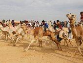 صور.. س&ج .. كل ما تريد معرفته عن مهرجان سباق الهجن بالإسماعيلية