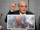 """""""الزراعة"""" تصدر حزمة إرشادية لحدائق النخيل لزيادة إنتاج التمور"""