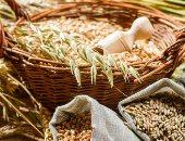 مؤسسة الحبوب السعودية تشترى 1.5 مليون طن من الشعير