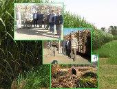 رئيس جمعية منتجى القصب بالأقصر: المزارعون يتجهون لحرث الأرض وتأجيرها