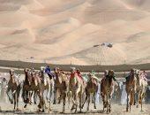 السعودية ..52 مليون ريال قيمة جوائز مهرجان ولى العهد للهجن