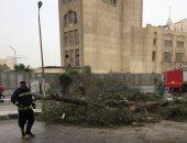 فيديو وصور.. سقوط شجرة ضخمة يتسبب فى غلق الطريق من الجانبين أمام الأوبرا