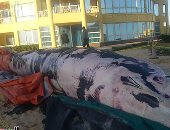 """وزير البيئة: تحديد سبب وفاة حوت الإسكندرية بعد تشريحه والأرجح """"النوة"""""""