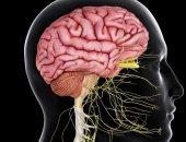 اعرف جسمك.. الأعصاب القحفية 12 زوج من الأعصاب تتحكم فى كل وظائف الجسم