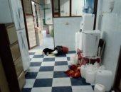 قارئ يشكو من انتشار القطط فى مستشفى الزقازيق العام .. صور