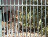 حديقة حيوان الجيزة تستعد لإجازة نصف السنة بزياد عدد منافذ الدخول.. صور