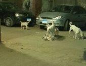 الكلاب الضالة تثير الذعر بين أهالى جزيرة بدران فى روض الفرج.. صورة
