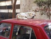 صور.. الكلاب الضالة تزعج أهالى شارع مسجد الشهداء فى الزيتون ومطالب بنقلها