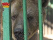 """اعرف معلومات جديدة عن """"الدب"""" فى حلقة جديدة على """"فارولاند"""""""