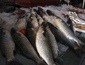 محافظ القليوبية: توفير جميع أنواع أسماك مزارع غليون بمنافذ المدن والأحياء