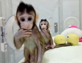 بحقنة واحدة.. علماء يقتربون من تطوير لقاح مضاد لفيروس الإيدز لحماية القردة