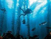 بعيدا عن البر.. علماء الآثار يدرسون غابات أسكتلندا تحت البحر