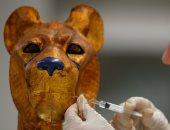 صور.. مقتنيات مذهله للملك توت عنخ آمون فى المتحف المصرى الكبير