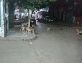 صور.. الكلاب تغزو شارع الأصبغ فى الزيتون ومطالب بنقلها بعيدا عن السكان