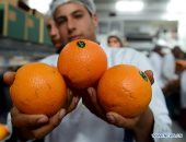 الزراعة تعلن احتلال صادرات الموالح المركز الأول عالميا بـ 1.398 مليون طن