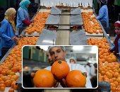 ارتفاع صادرات 3 محاصيل زراعية لـ2.4 مليون طن.. والبرتقال فى المقدمة