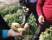 """""""الزراعة"""" حملات مرورية على البطاطس الصيفى لزيادة الإنتاج ومكافحة آفة المحصول"""