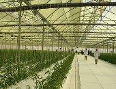 فيديو.. جولة فى مشروع الصوب الزراعية الأكبر فى الشرق الأوسط