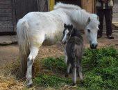 الهيئة الزراعية: بيع فائض إنتاج الخيول لتوفير موارد للنهوض بمحطة الزهراء