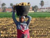 أستاذ مناخ زراعى يحدد أبرز التوصيات لمزارعى البطاطس لزيادة الإنتاج ..فيديو