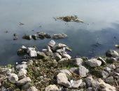 قارىء يستغيث من تلوث مياه النيل فى البحيرة بمخلفات البناء والمصانع