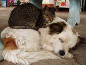 اعمل خير وحافظ على صحتك..نصائح للتعامل بطريقة صحيحة مع قطط وكلاب الشوارع