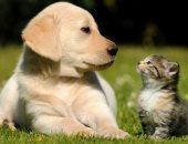4  حاجات لازم تعرفها قبل ما تقرر تجيب حيوان أليف لولادك