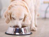 اكتشاف مادة سامة تسبب الموت البطىء فى الأطعمة المعلبة للكلاب