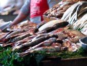 أسعار الأسماك بسوق العبور اليوم.. البلطي الأسواني 17-37 جنيهاً للكيلو
