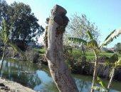 صور .. شكوى من قطع الأشجار فى طريق مركز شبراخيث بالبحيرة