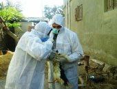 """""""الخدمات البيطرية """" تحصين مليون و811 ألف طائر ضد مرض الأنفلونزا"""