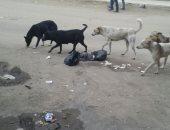 """شكوى من انتشار  """"الكلاب الضالة """" فى قرية بشتيل بالجيزة"""