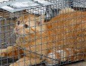 بعد ما ساعدت المرضى...محكمة سويدية تأمر بطرد قطة من عيادة بيطرية